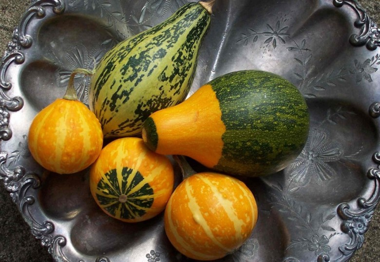How To Preserve Gourds And Display Them Too New England Today