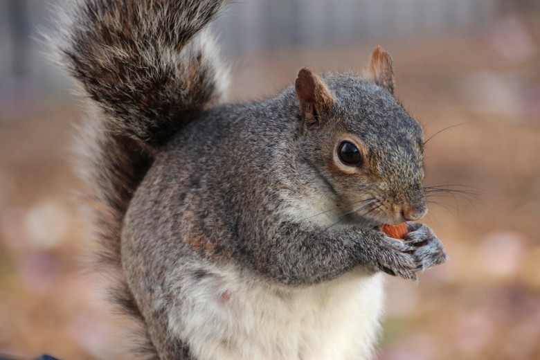 How To Keep Squirrels Away From Fall Bulbs New England Today