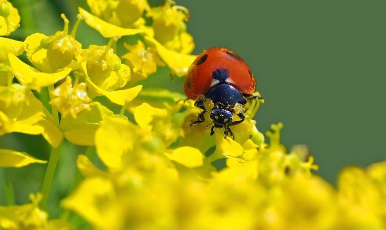 What Do Ladybugs Eat? | All About Ladybugs - New England Today