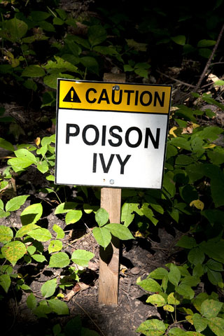 How to Treat Poison Ivy and Poison Oak