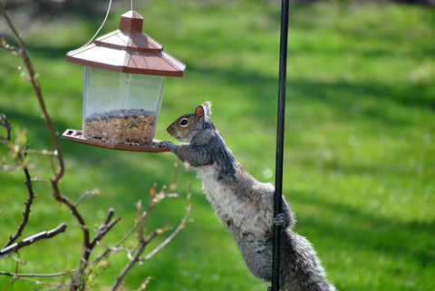 from away how bird squirrels feeder of feeders to keep out