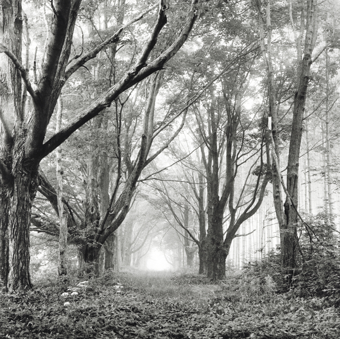 Tunnel of Trees, Rockport, Maine, 1996.