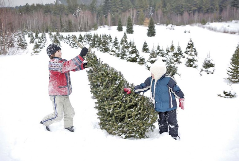 timeless holiday tradition ursula and virgil collins laine pick the perfect balsam - Christmas Tree Farm Colorado