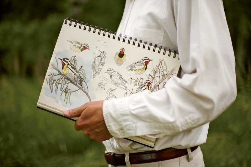 Atraer aves a su patio trasero | Extensión Cooperativa UGA