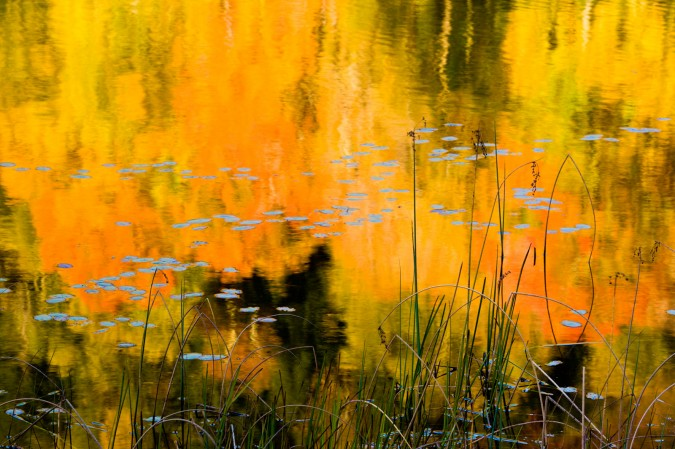 Fall colors reflected in a pond in Tyringham, Massachusetts