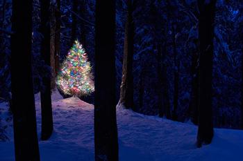 Springfield Ma Christmas Lights