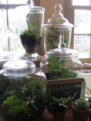 How To Make A Terrarium Easy Steps New England Today