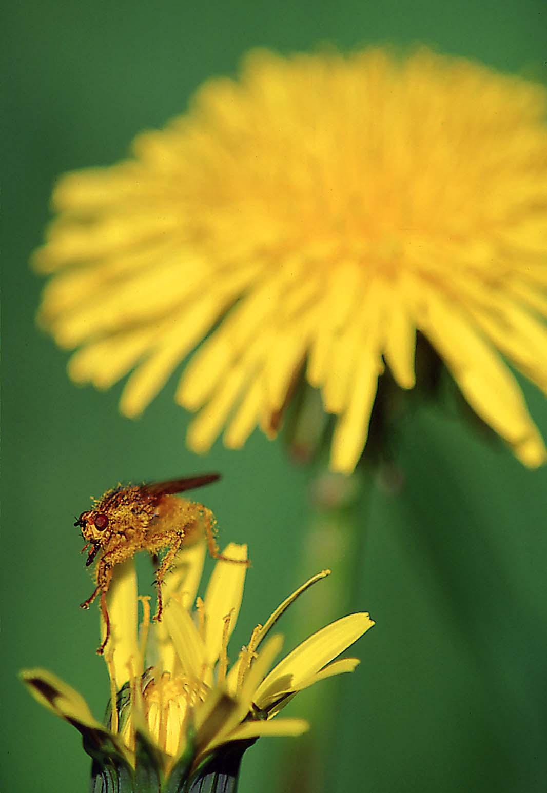 Spring Nectar