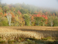 Autumn Morning Fog (user submitted)