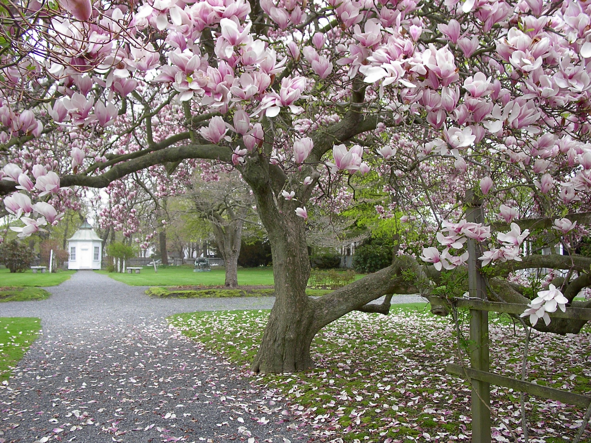 Springtime In The Linden Place Gardens New England Today