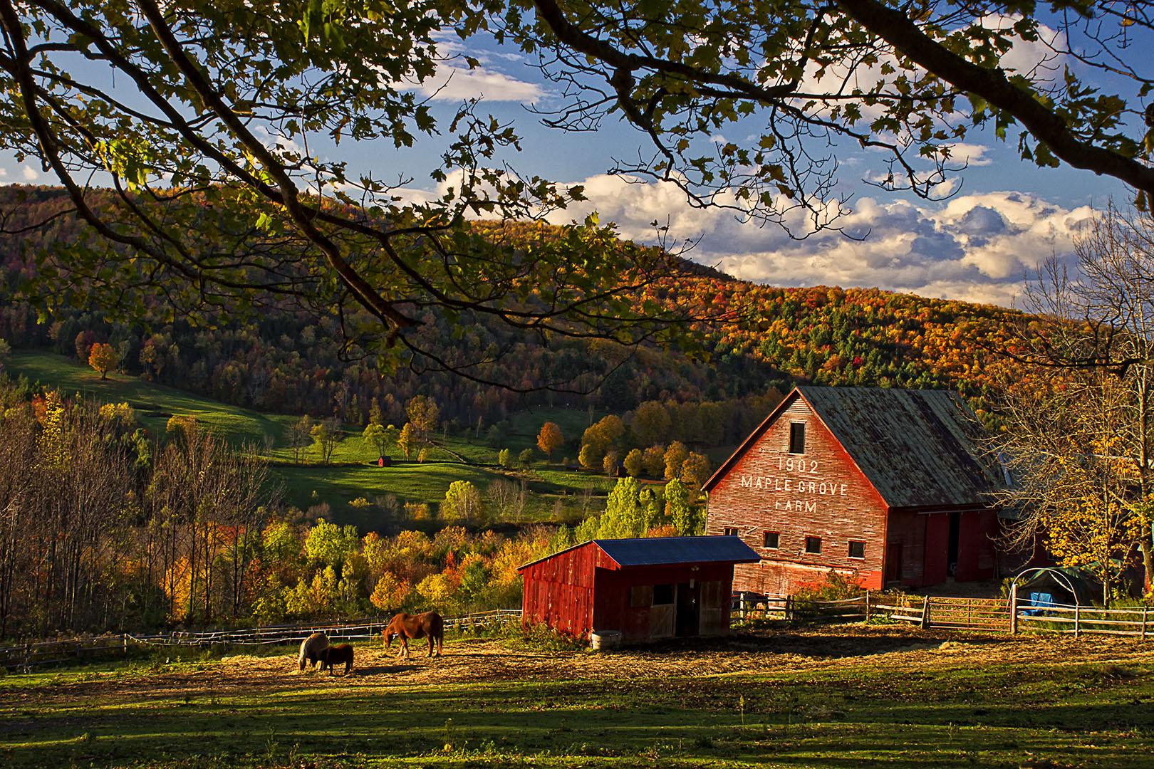 Sunset At Maple Grove Farm In E Barnard Vermont New