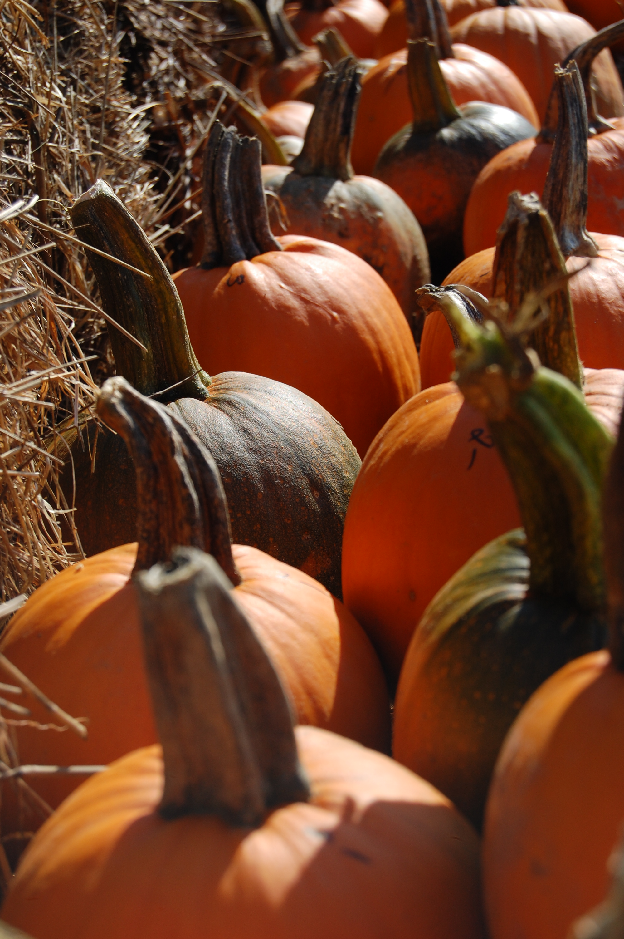 Pumpkins (user submitted)