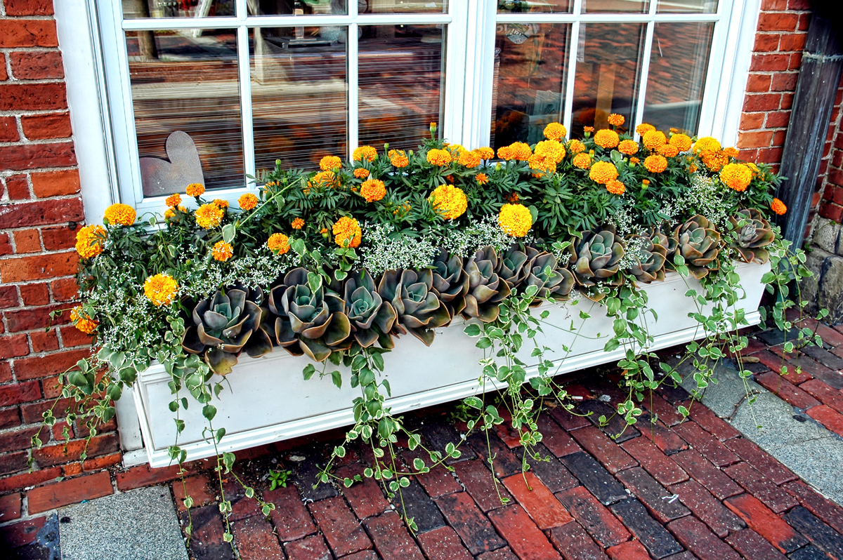 how to plant a window box diy window boxes tips and advice new england today