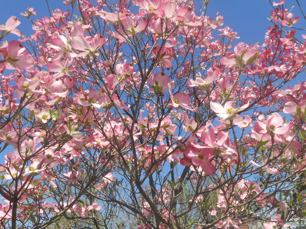 Best Spring Flower Festivals In New England New England Today