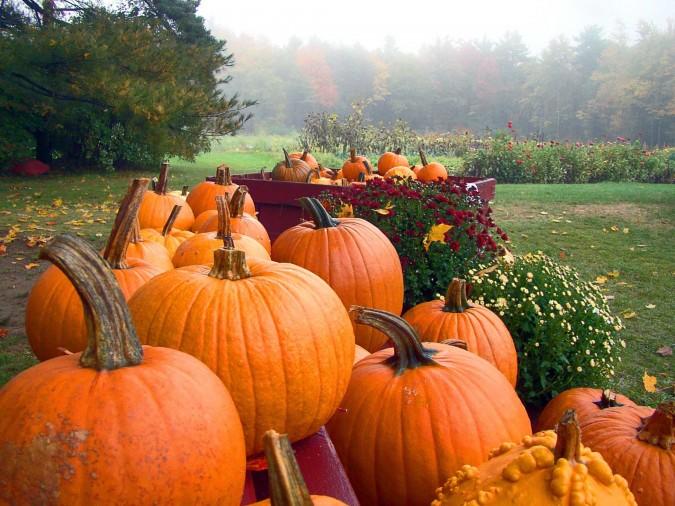 Halloween Decorations Photographs New England Today
