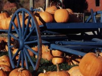 Pumpkin Cart (user submitted)