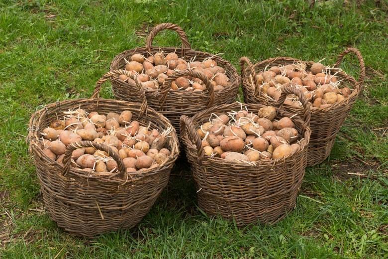 Maine Potato Recess
