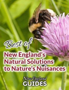 Best of New England Natural Solutions to Pests