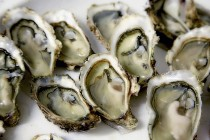 Oyster Guide | New England Oysters