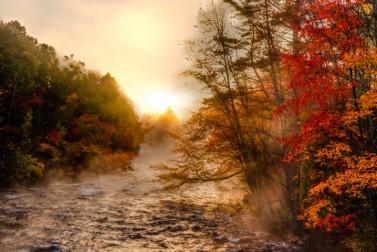 Fall Foliage Photo Gallery