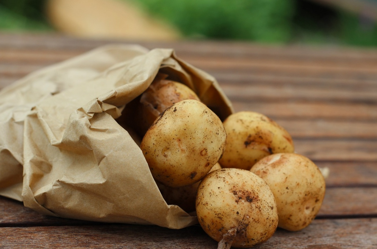 Potato Tips How To Harvest Store And Cook Potatoes New England Today