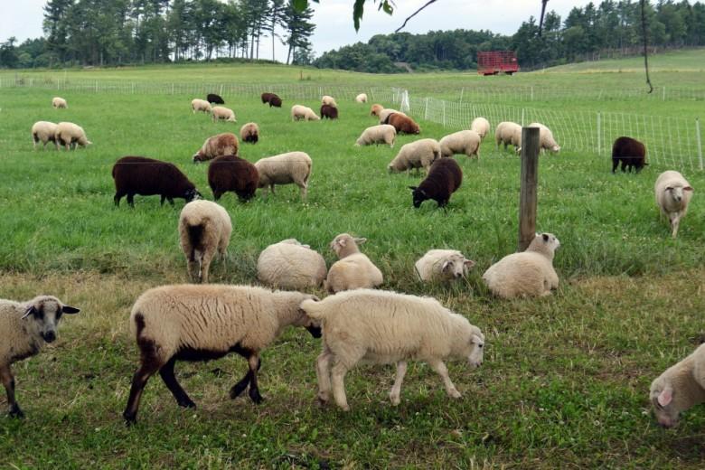 Rooms: Shelburne Farms In Shelburne, Vermont