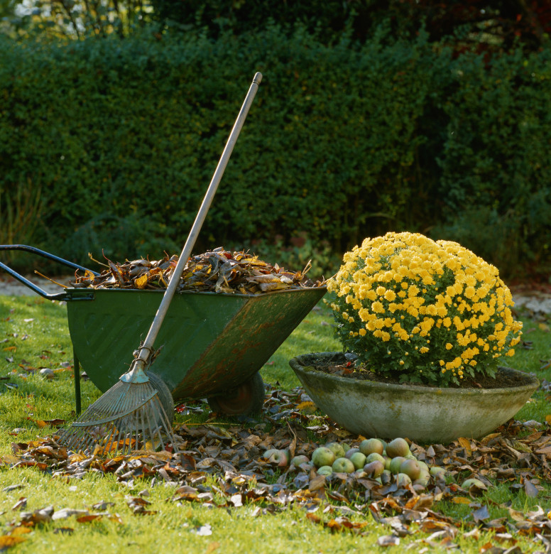 Growing Gold | How to Use Fallen Leaves As Fertilizer