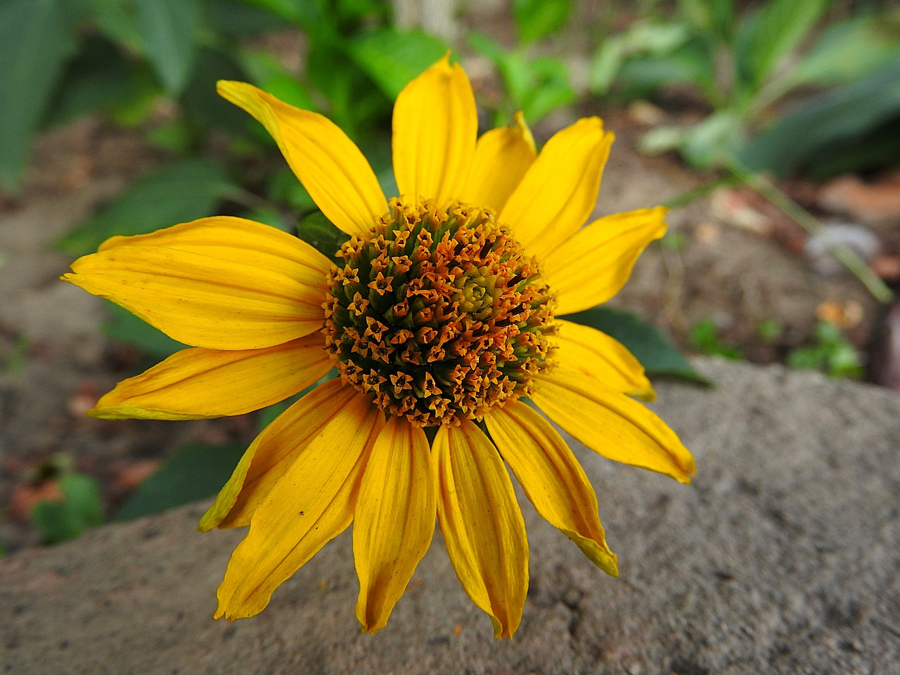 When To Cut Perennial Plants Down Gardening Advice New England Today